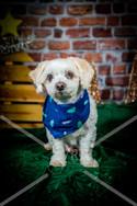 Rosemary Pups-130.jpg