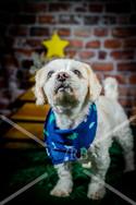 Rosemary Pups-126.jpg