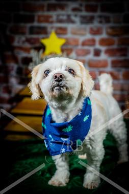 Rosemary Pups-125.jpg