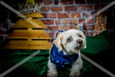 Rosemary Pups-136.jpg