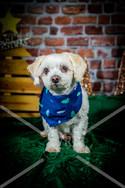 Rosemary Pups-131.jpg