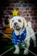 Rosemary Pups-127.jpg