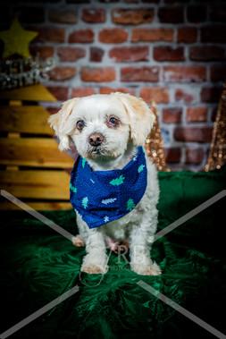 Rosemary Pups-132.jpg