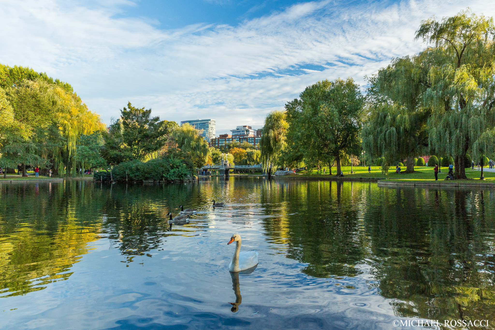 public garden swan