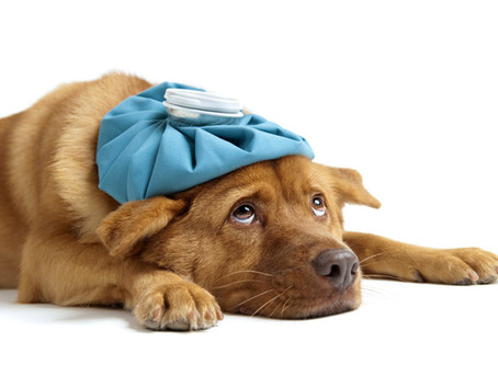 GI Issues And Your Pet