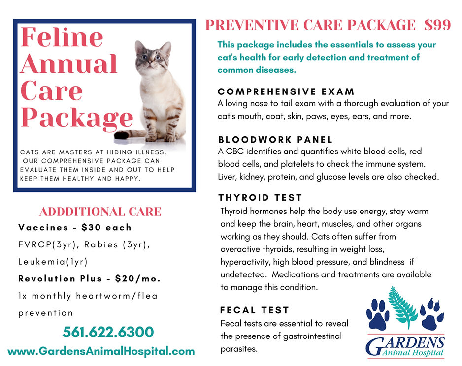 Cat Package PNG.jpg