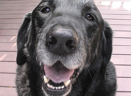 Aging Pet Care