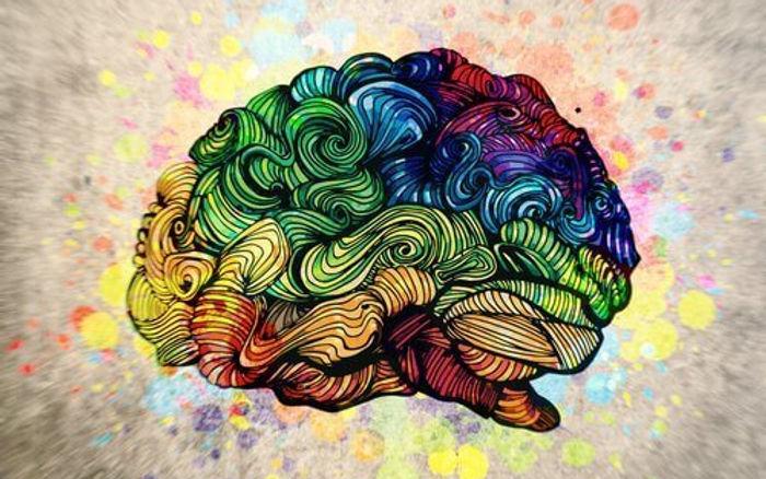 cerveau-colore.jpg