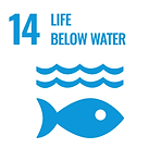 Read more about SDG14: Life below water