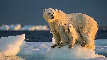 PolarBearWithCubOnSeaIce_640x360.jpg