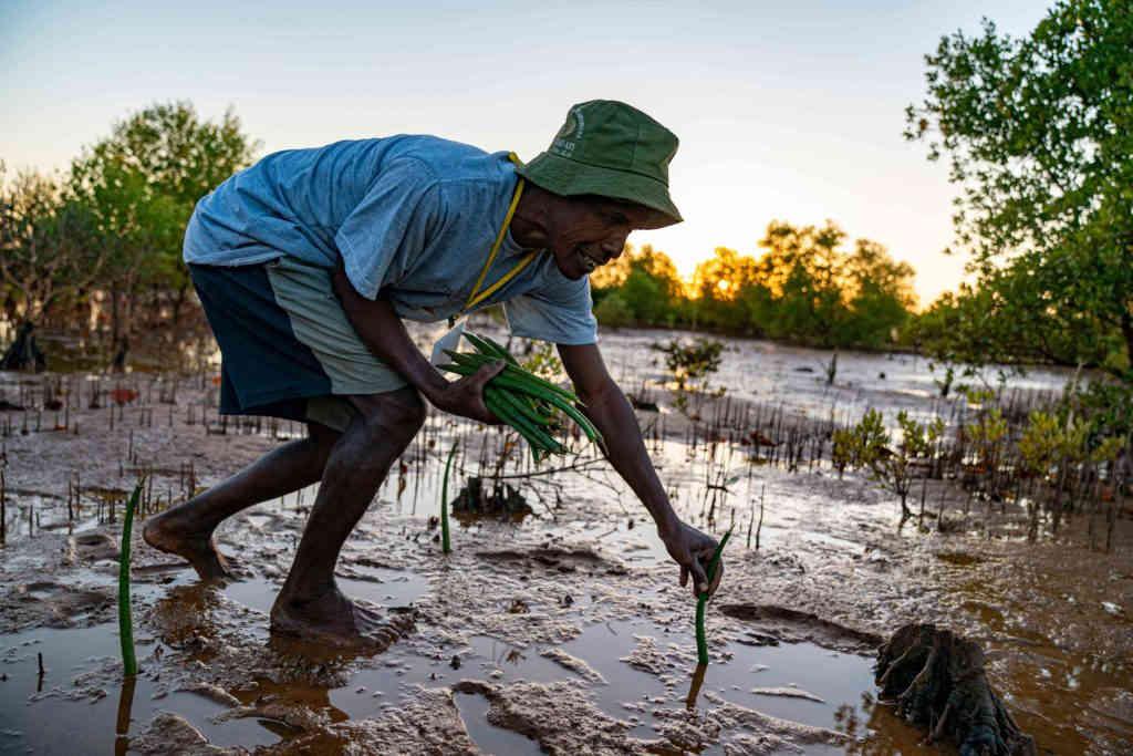 Mangrove tree planting in Madagascar
