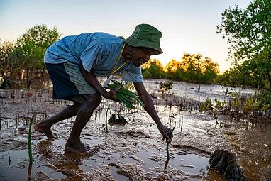 an old man mangrove planting in Madagascar