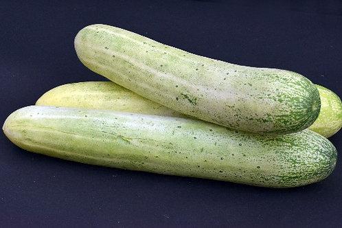 Cucumber ( Kakdi ) - Gavran