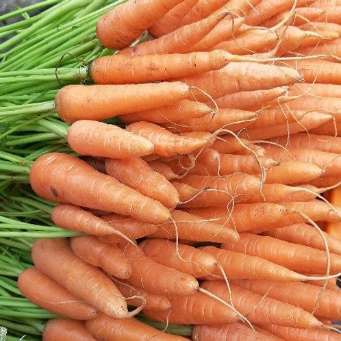 Baby Carrot ( Mahabaleshwar )