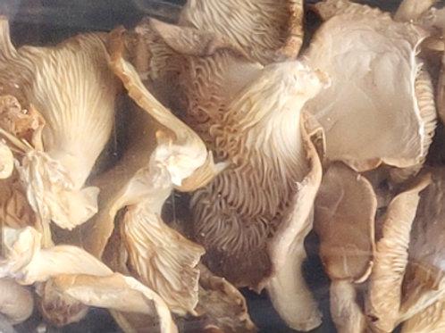 Mushroom (Oyster) - Dried