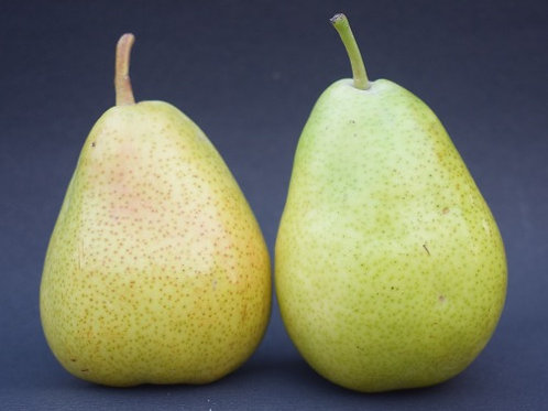 Pear ( Beauty )