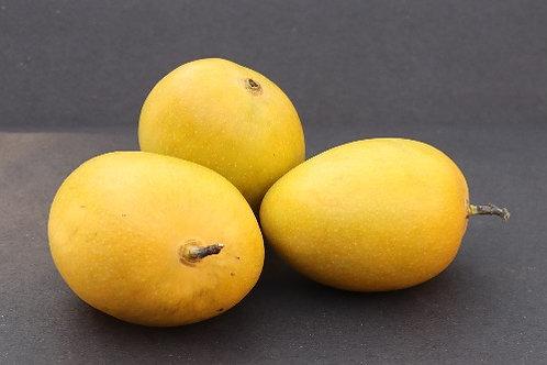 Mango (Alphonso) - Medium