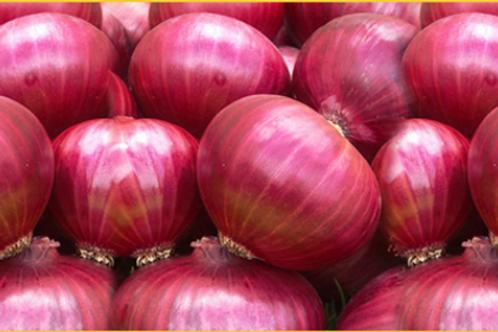 Onion ( Kanda )