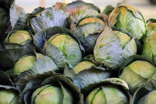 Cabbage (Kobi)