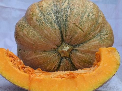 Pumpkin ( Kashi Bhopla )