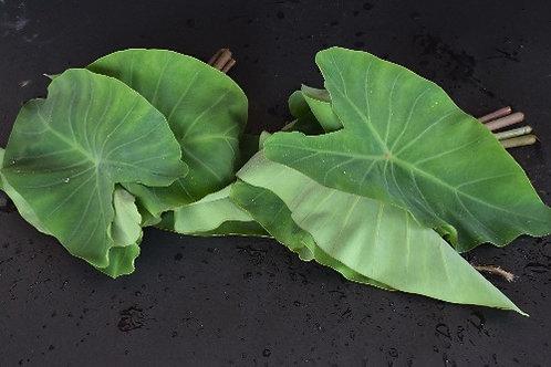 Colacasia ( Alu ) leaves / Elephant ear