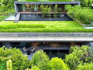 Green Roofing In Australia Saves Time And Money
