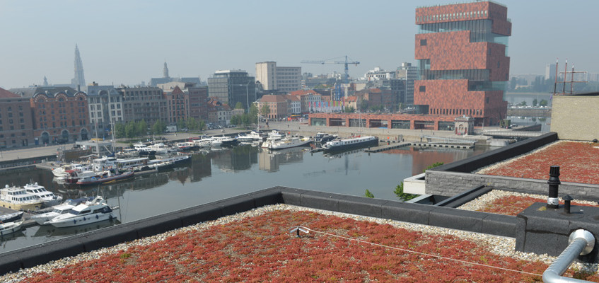 green roof - DeBoer