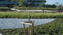 Green roofs: what and why