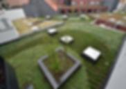 De Boer Green Roof Solutions