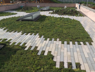 4 Reasons You Should be Investing in a Green Roof in Australia.