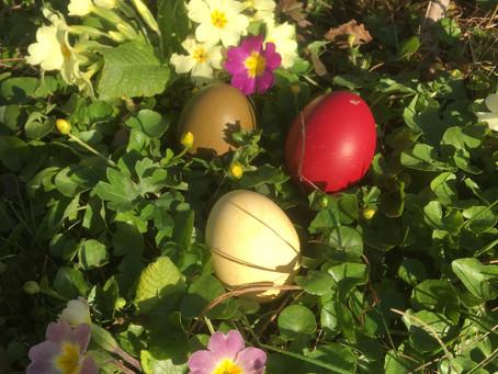 Wir wünschen euch schöne Ostern und fröhliches Eiersuchen. Euer Filmkunstprojekt-Team
