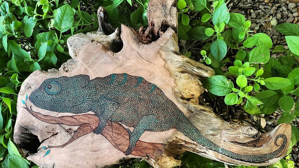 Steve the Chameleon