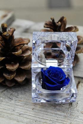 Rose éternelle (petite)