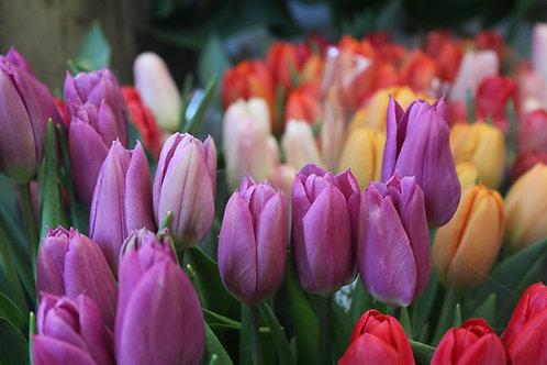 Bouquet de 10 tulipes