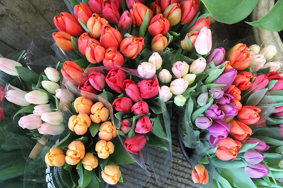 Bouquet de 20 tulipes