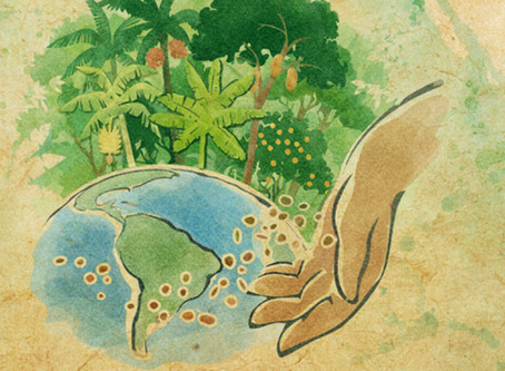 Agroflorestando o mundo