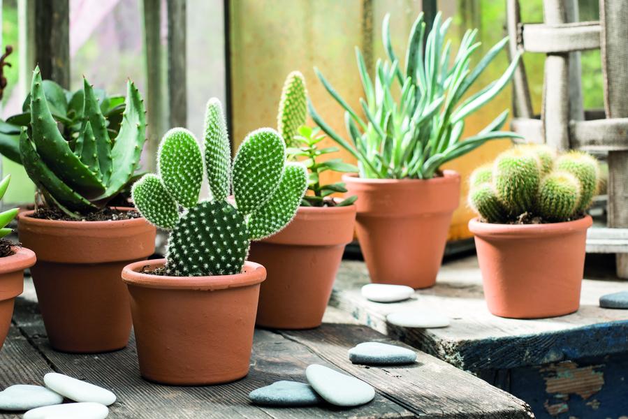 Cacti Setting