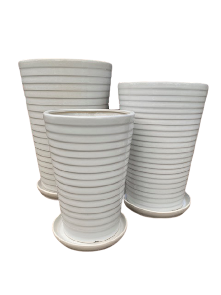 NR155WHV Venetian Cone and Saucer
