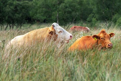 White Edge Moor, Derbyshire