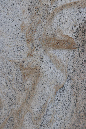 Detail of Trace