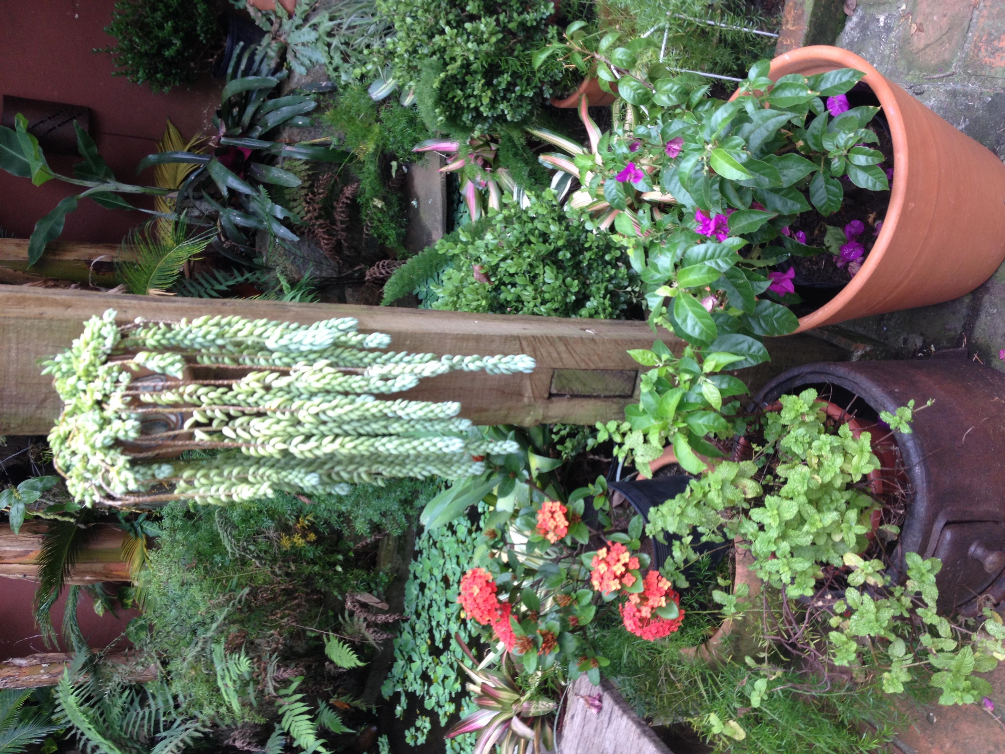 Jardim Flores