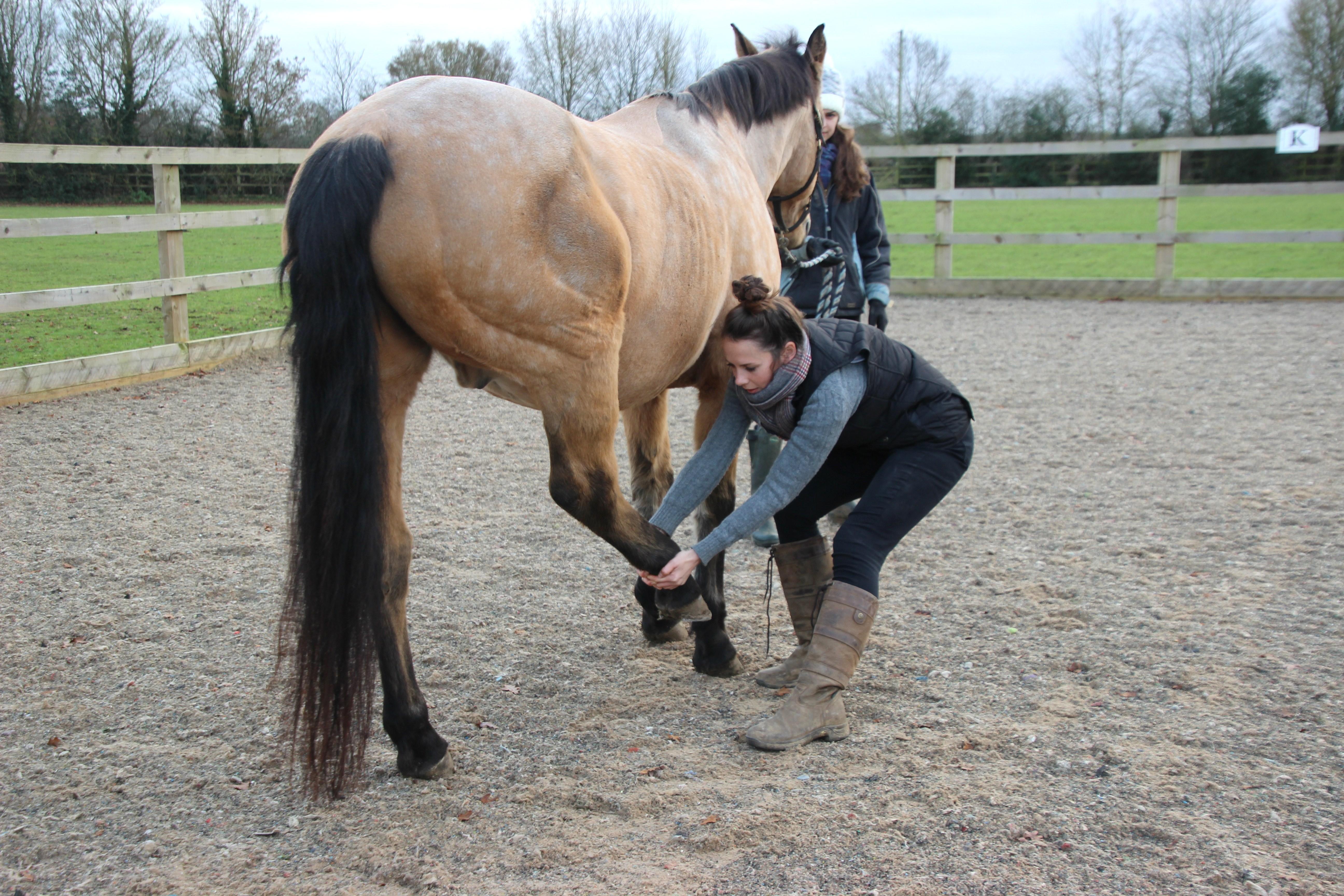 Equine stretches