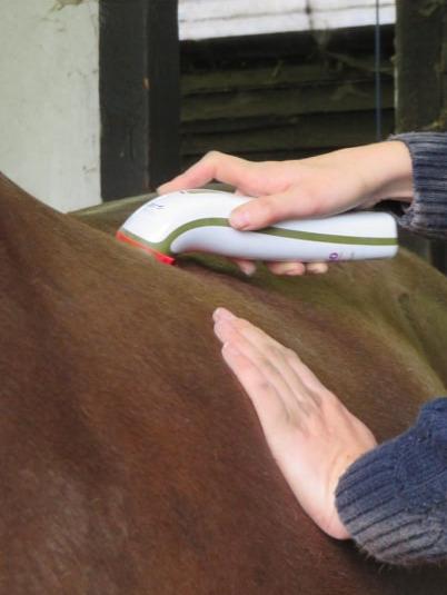 Equine laser treatment