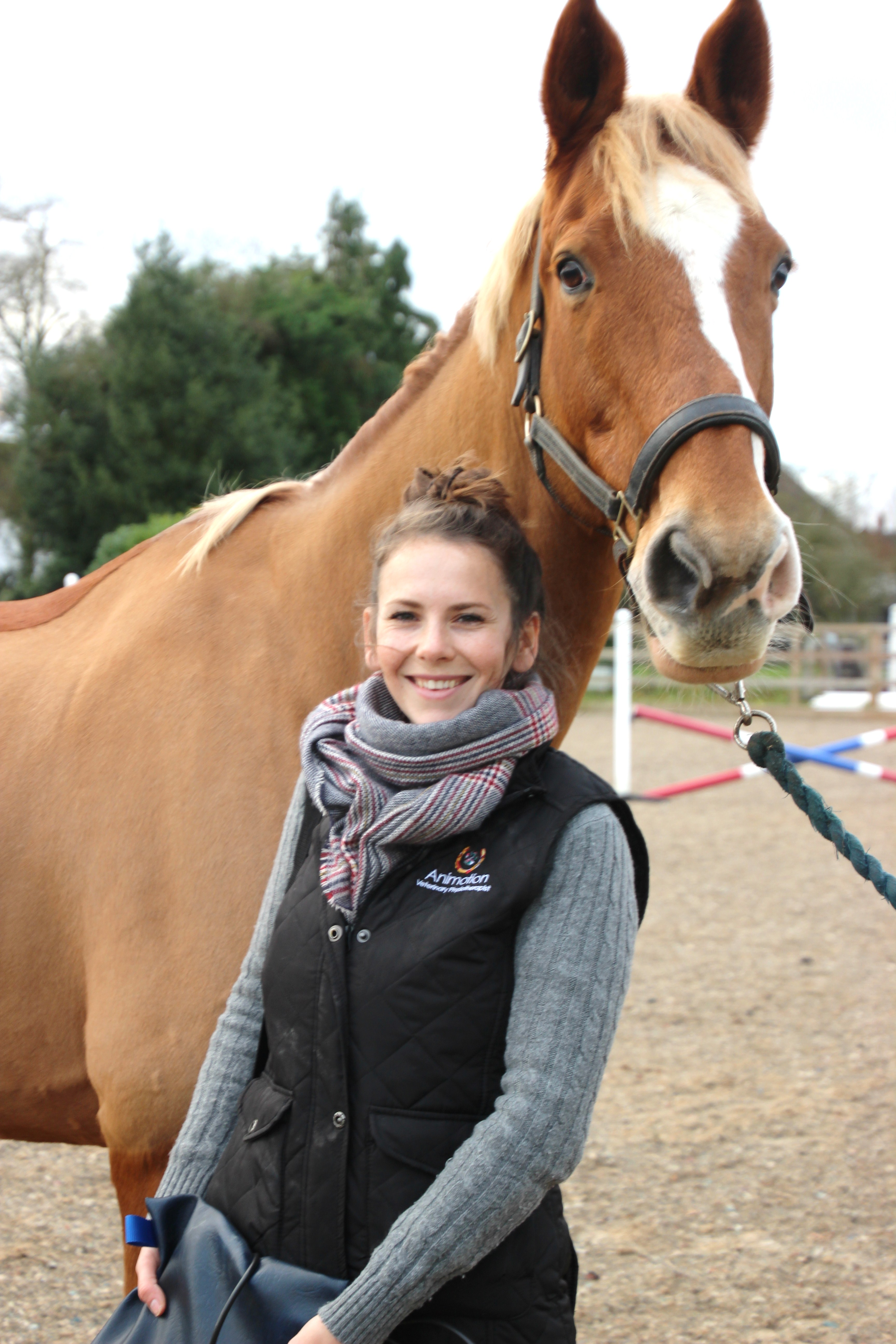 Equine Veterinary physiotherapy