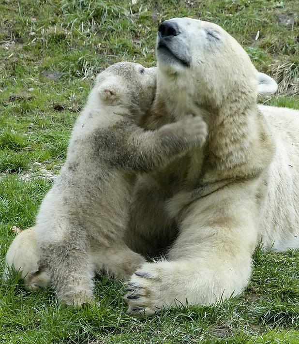 polar-bear-560215_1920 (2).jpg