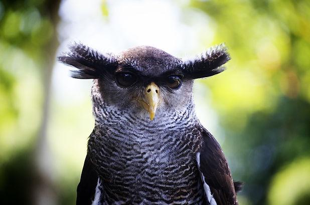 owl-teacher round table.jpg