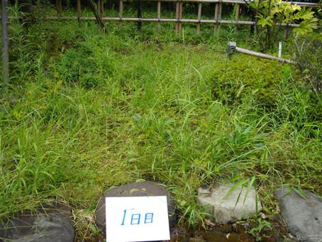 除草剤「草とりヘルパー物語」散布テスト結果をご紹介