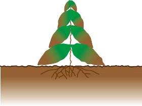 葉・茎から吸収され根まで枯れる