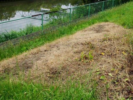 除草剤「草とりヘルパー物語」