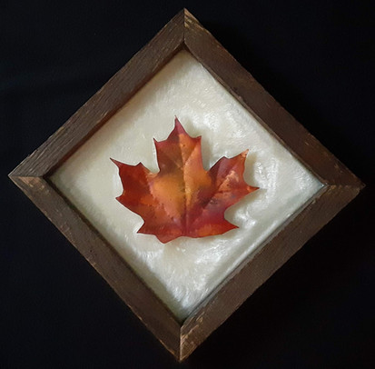 Sugar Maple Leaf - Not For Sale